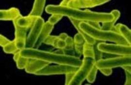 Профилактика и раннее выявление туберкулеза 15